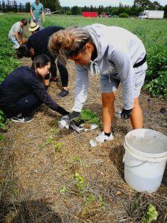 mch planting lettuce